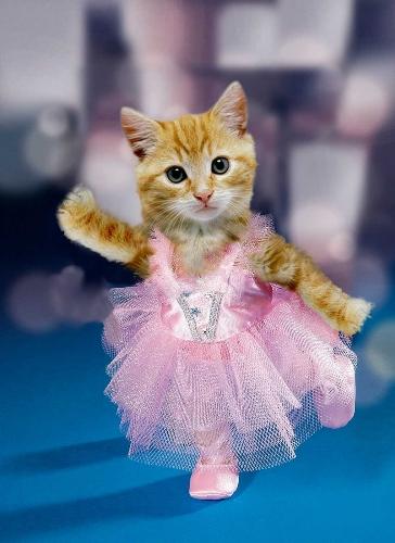 {#Ballerina-Kitten-34271.jpg}