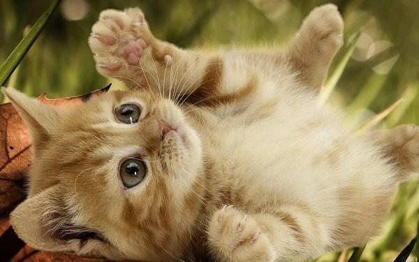 {#Playful-Kitten-kittens-16155935-1280-800.jpg}