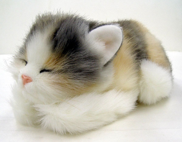 {#cute-cat-kitten.jpg}