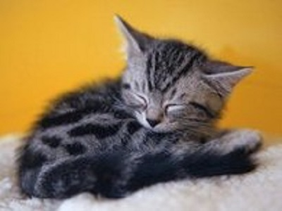 {#i-am-sleepy-animal-cat-feline-kitten-sleep-sweet-tabby-2131971.jpg}