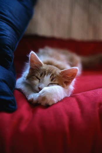 {#kitten-sleeping.jpg}