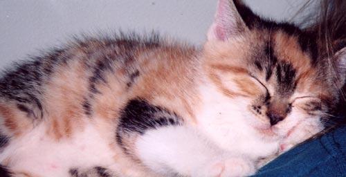 {#sleeping-kitten.jpg}