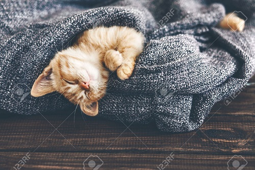 {#46058546-Cute-little-ginger-kitten-is-sleeping-in-soft-blanket-on-wooden-floor-Stock-Photo.jpg}