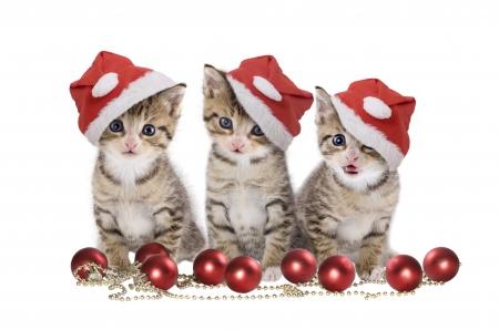 {#christmas-kittens.jpg}